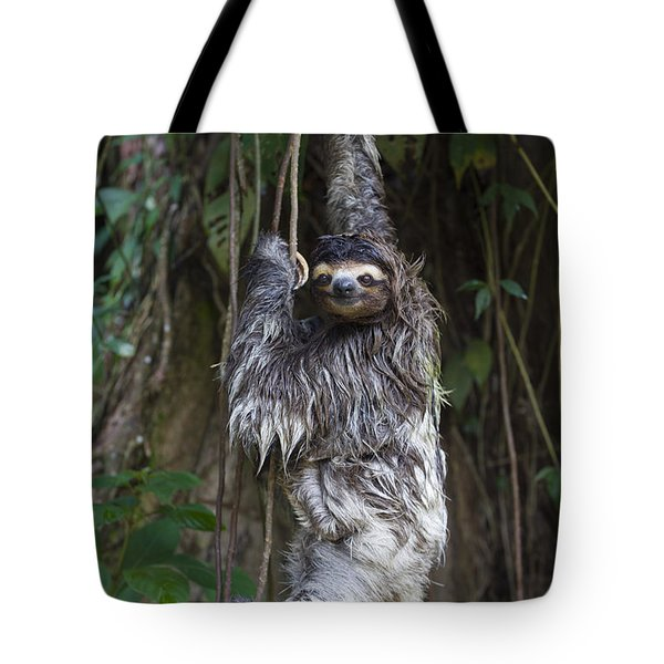 Brown Throated Three Toed Sloth Mother Tote Bag by Suzi Eszterhas