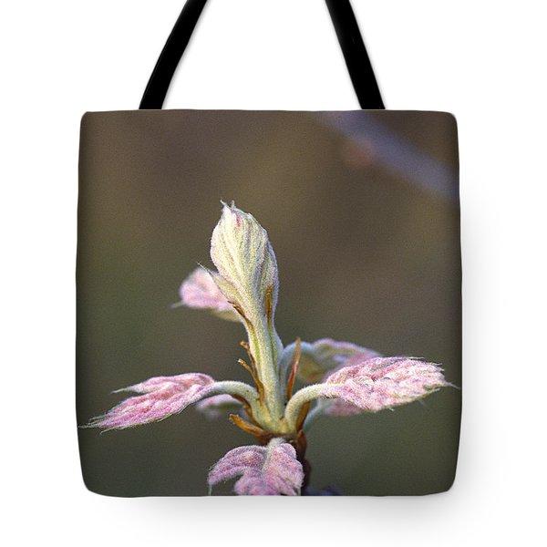Budding Oak Leaves Tote Bag