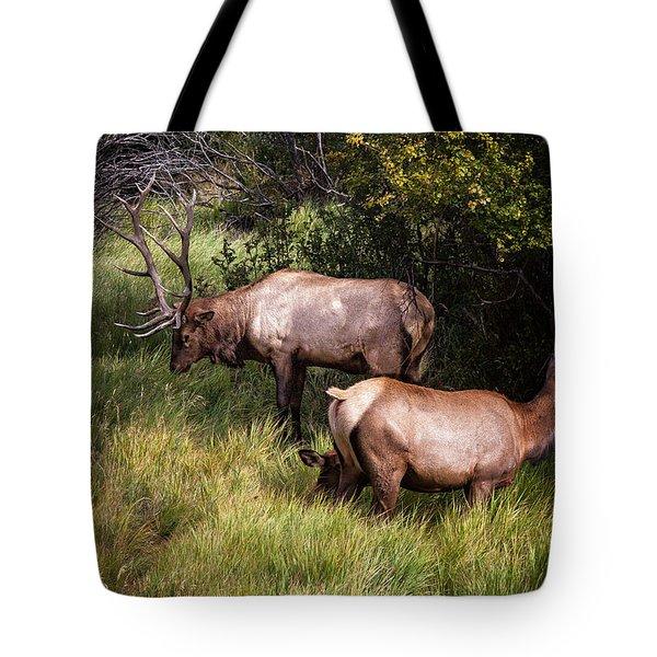 Bull Elk 7x7 Tote Bag