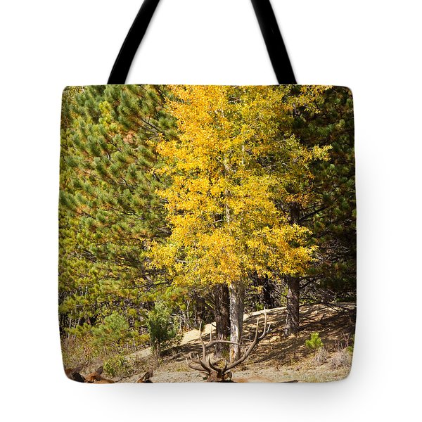 Bull Elk Watching Over Herd 3 Tote Bag by James BO  Insogna