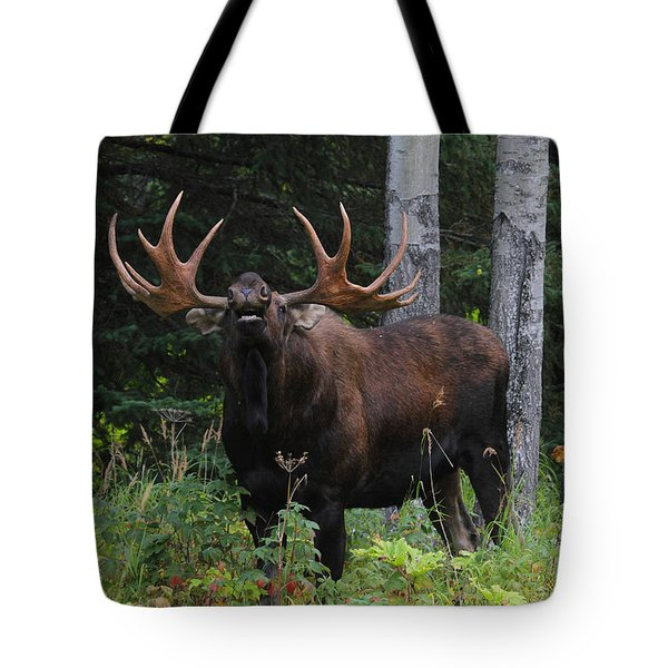 Tote Bag featuring the photograph Bull Moose Flehmen by Doug Lloyd