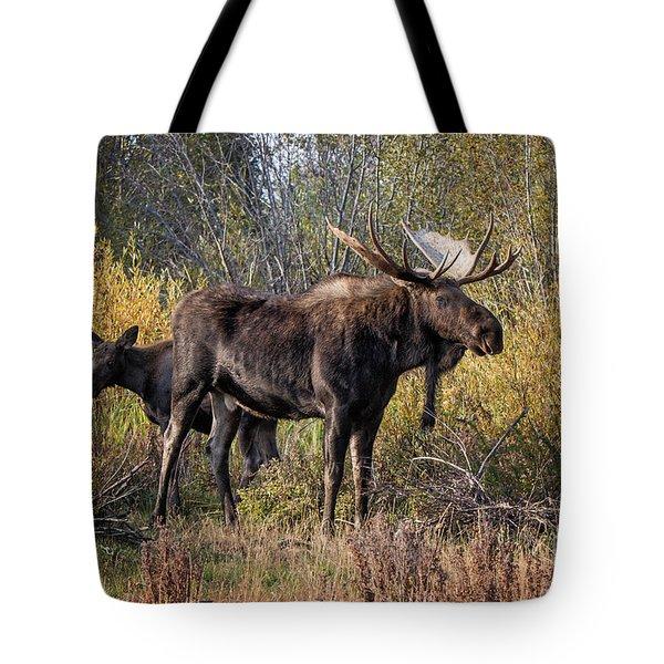 Bull Tolerates Calf Tote Bag