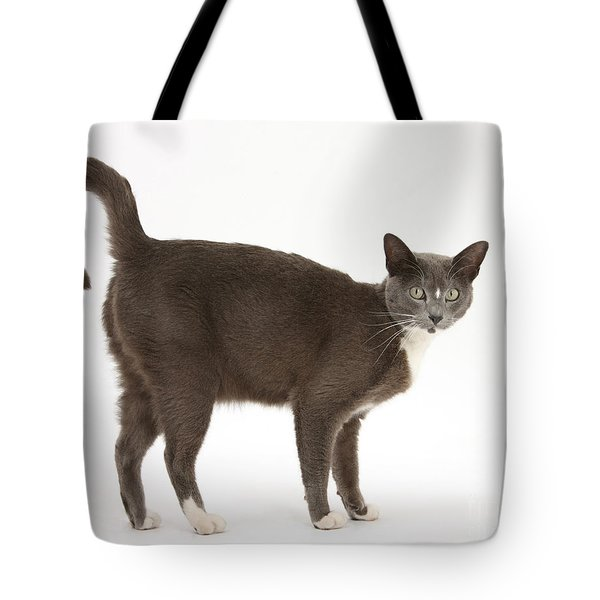 Burmese-cross Cat Tote Bag by Mark Taylor