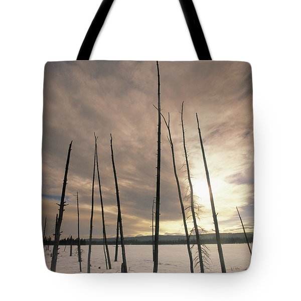 Burnt Pieces Of Black Spruce, Boggy Tote Bag by Darwin Wiggett