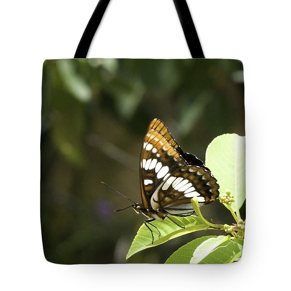 Tote Bag featuring the photograph Butterfly At Rest by Betty Depee