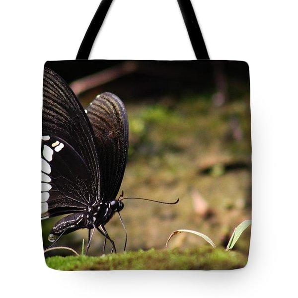 Butterfly Feeding  Tote Bag