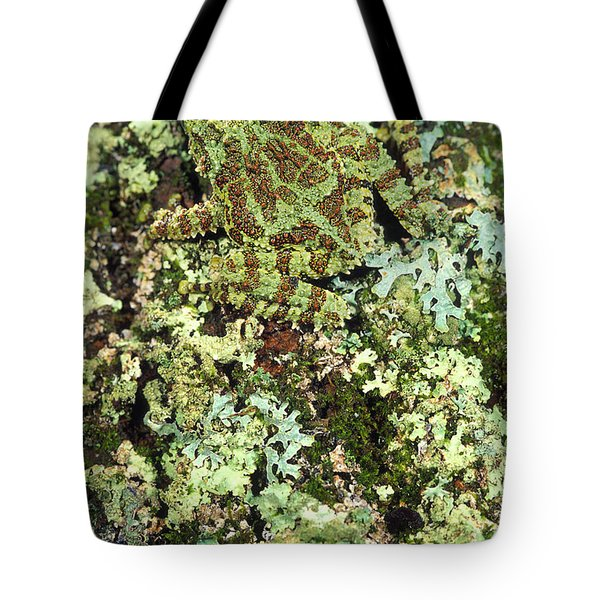 Camouflaged Vietnamese Mossy Tree Frog Tote Bag by John Pitcher