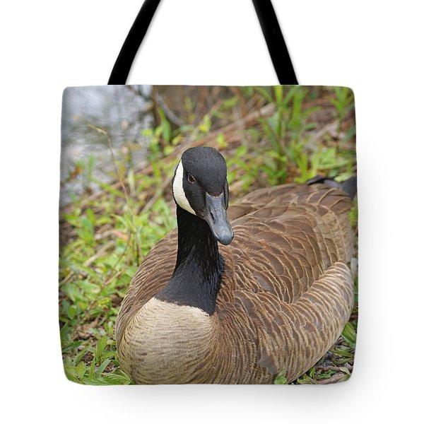 Canadian Goose Resting Tote Bag by J Jaiam
