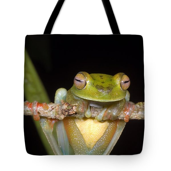 Canal Zone Tree Frog Tote Bag by Dante Fenolio
