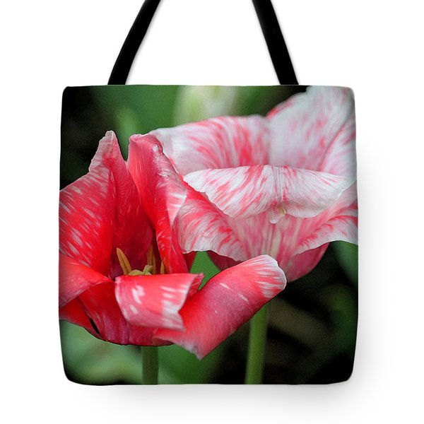 Candy Stripers Tote Bag by Suzanne Gaff