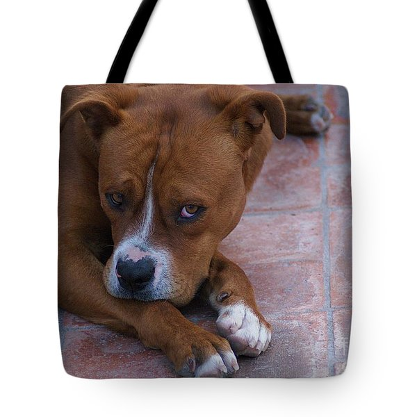 Tote Bag featuring the photograph Canelo With His Look by John  Kolenberg
