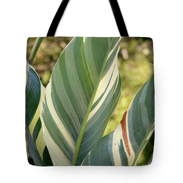 Tote Bag featuring the photograph Canna 'stuttgart' 2019 by Brian Gryphon