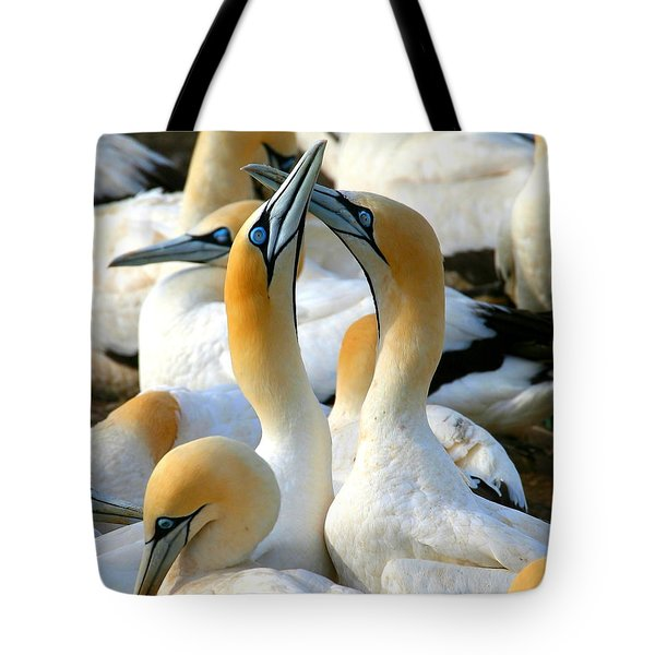 Cape Gannet Courtship Tote Bag