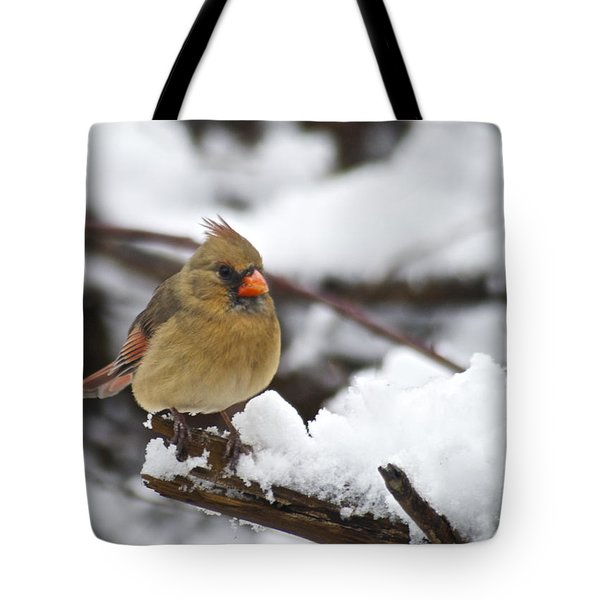Cardinal Female 3679 Tote Bag by Michael Peychich