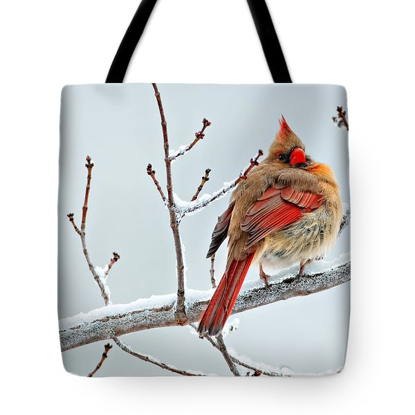 Cardinal I The Snow  Tote Bag