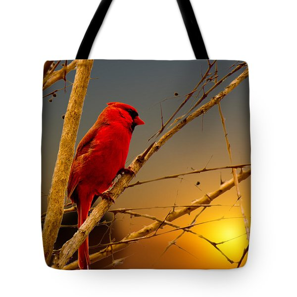 Cardinal Sunrise Tote Bag by Barry Jones