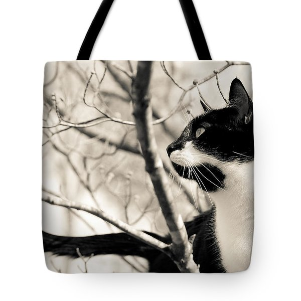 Cat In A Tree In Black And White Tote Bag