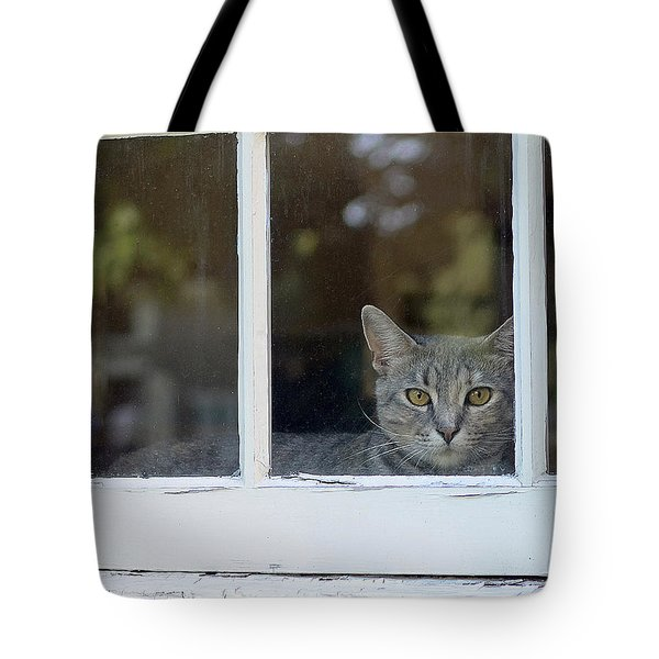 Cat In The Window Tote Bag by Lisa Phillips