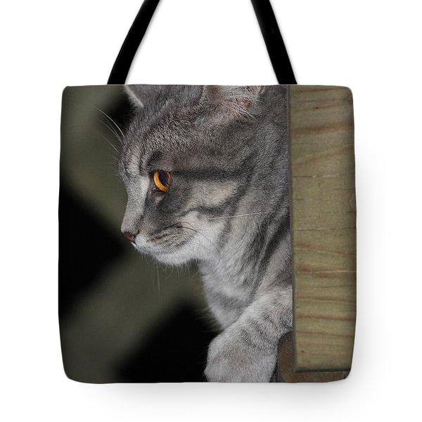 Cat On Steps Tote Bag