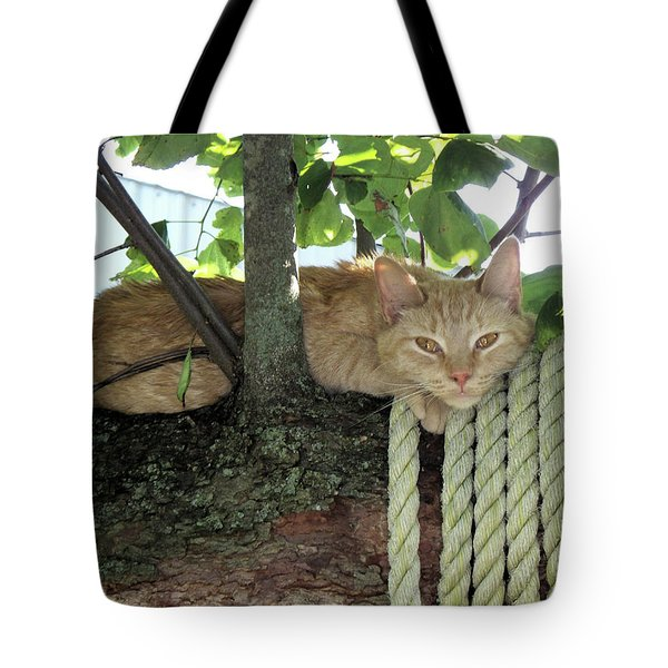 Tote Bag featuring the photograph Catnap Time by Thomas Woolworth