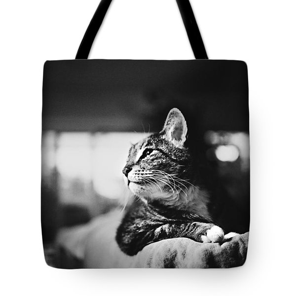 Cats Portrait Tote Bag by Sumit Mehndiratta