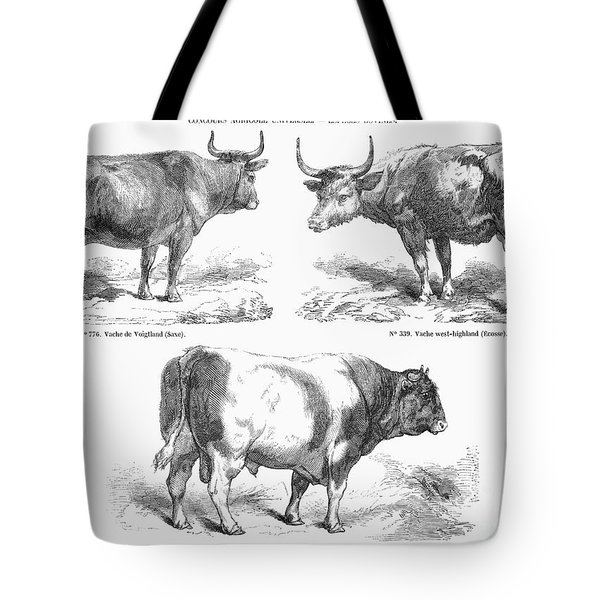 Cattle Breeds, 1856 Tote Bag by Granger