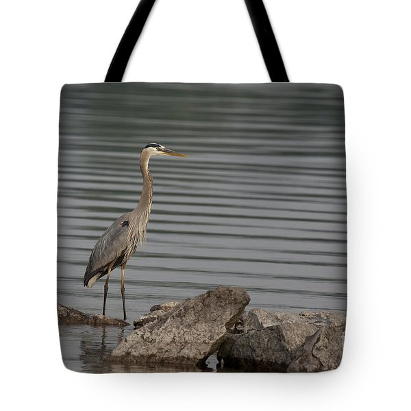 Cautious Tote Bag by Eunice Gibb
