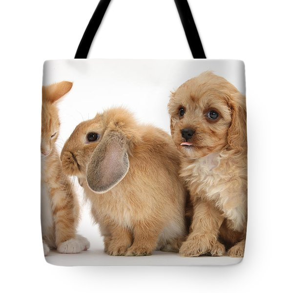 Cavapoo Pup, Rabbit And Ginger Kitten Tote Bag by Mark Taylor