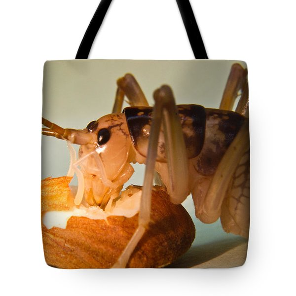 Cave Cricket Feeding On Almond 11 Tote Bag by Douglas Barnett