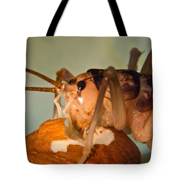 Cave Cricket Feeding On Almond 16 Tote Bag by Douglas Barnett