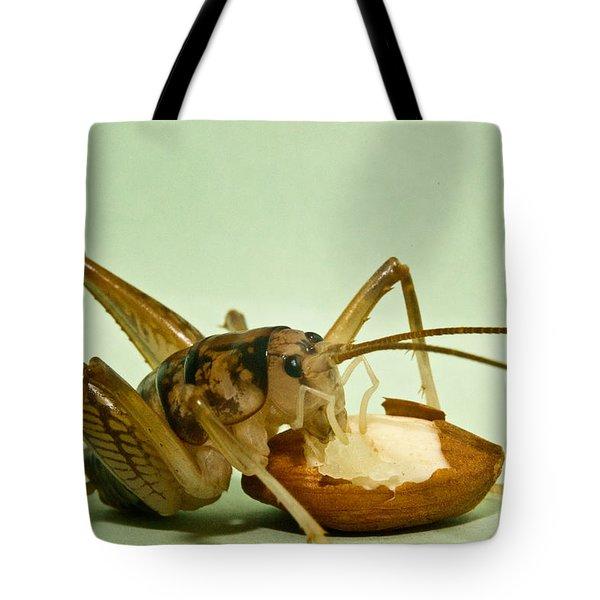 Cave Cricket Feeding On Almond 8 Tote Bag by Douglas Barnett