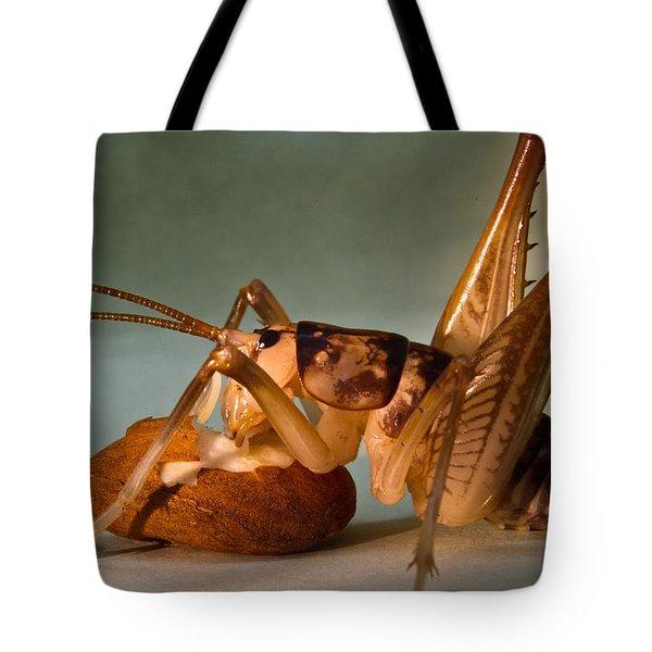 Cave Cricket Feeding On Almond 9 Tote Bag by Douglas Barnett