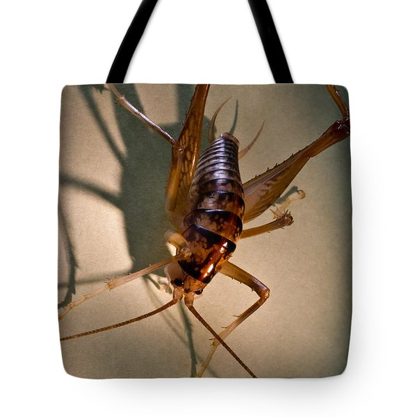 Cave Cricket In Shadow 2 Tote Bag by Douglas Barnett