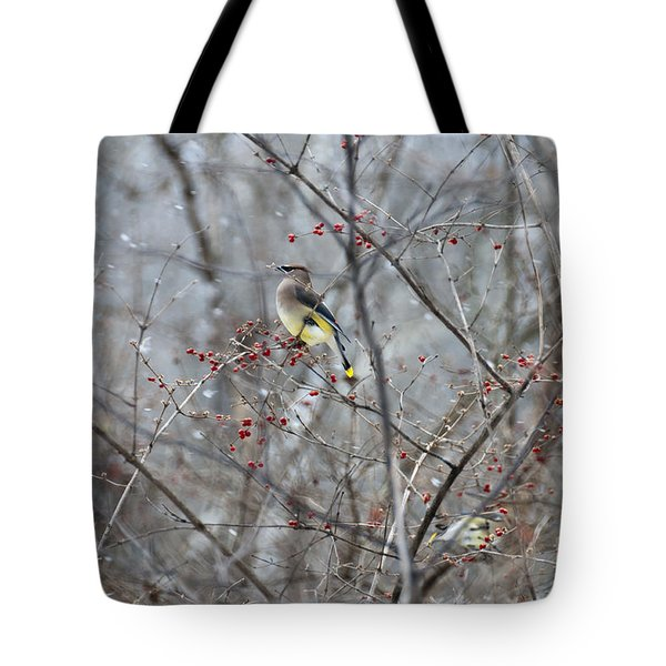 Cedar Wax Wing 3 Tote Bag by David Arment