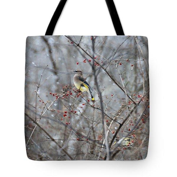 Cedar Wax Wing 3 Tote Bag by David Arment