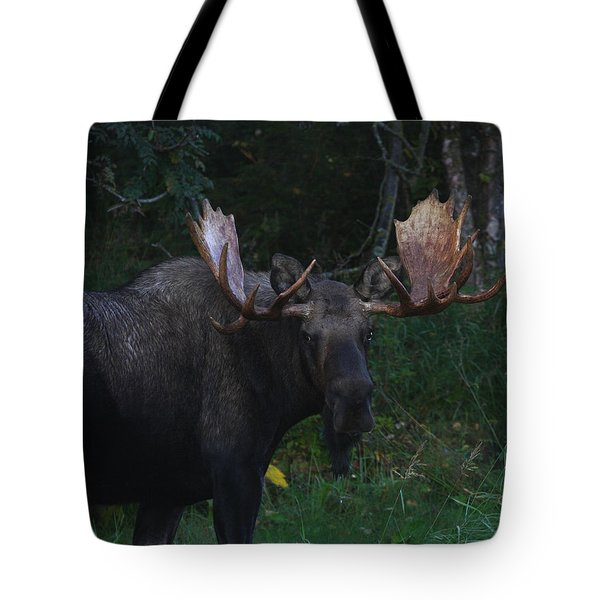 Tote Bag featuring the photograph Checking You Out by Doug Lloyd
