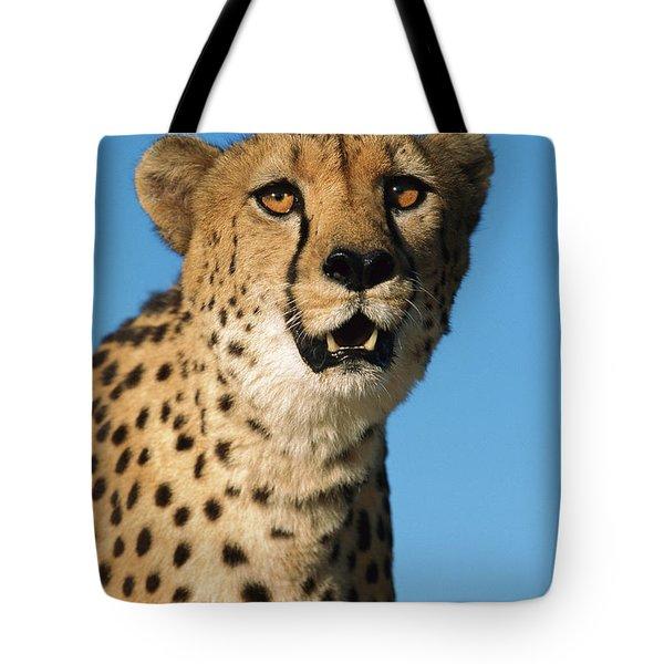 Cheetah Acinonyx Jubatus Portrait Tote Bag by Ingo Arndt