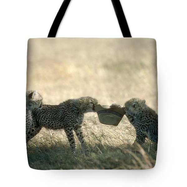 Cheetah Cubs Play With Hat Tote Bag by Greg Dimijian