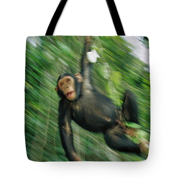 Chimpanzee Pan Troglodytes Juvenile Tote Bag by Cyril Ruoso