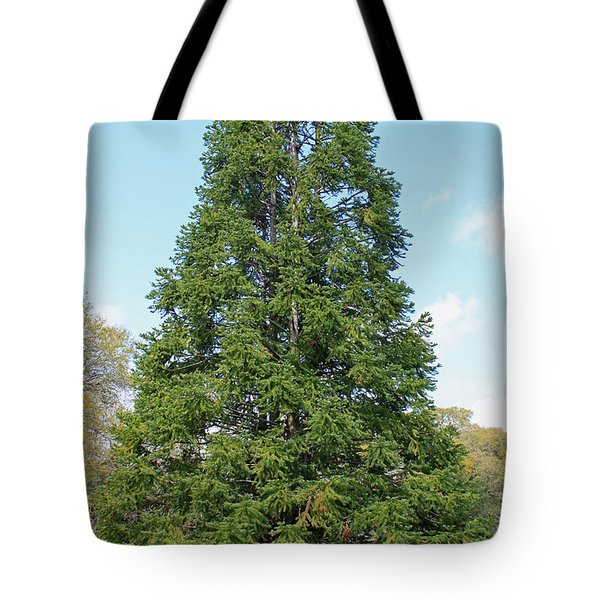 China Fir Tote Bag by Suzanne Gaff