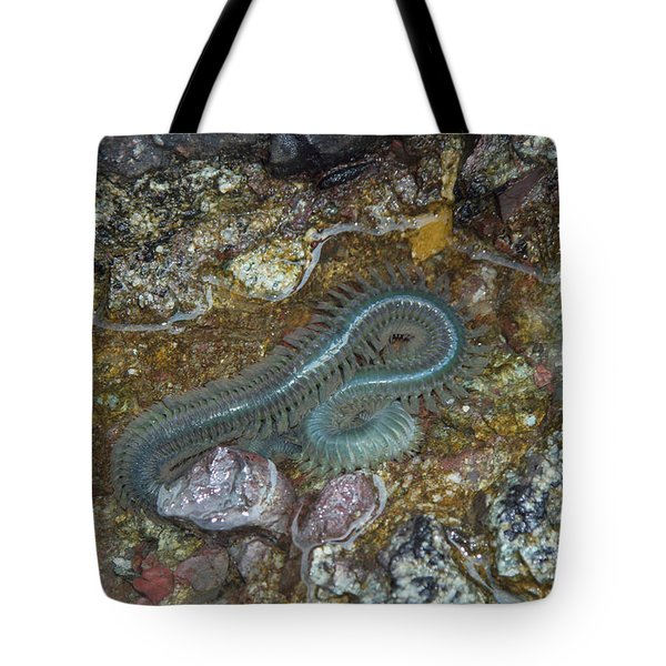 Clam Worm Tote Bag by Ted Kinsman