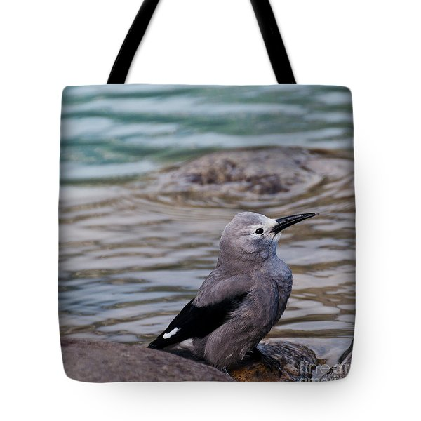 Tote Bag featuring the photograph Clark's Nutcracker2 by Cheryl Baxter