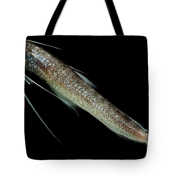 Codlet Tote Bag by Dant� Fenolio