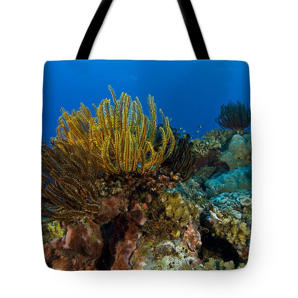 Colony Of Crinoids, Papua New Guinea Tote Bag by Steve Jones