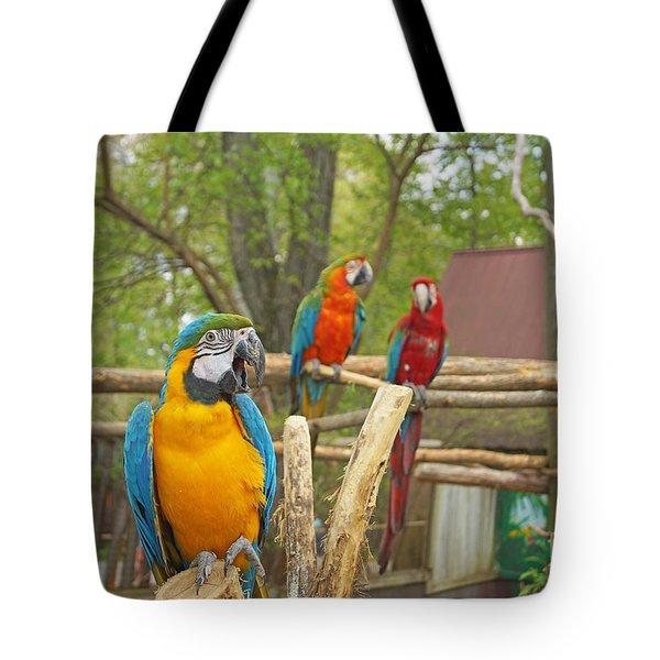 Color Of Parrots  Tote Bag by J Jaiam
