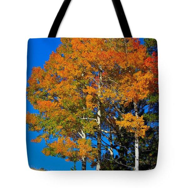 Colorado Aspens Tote Bag