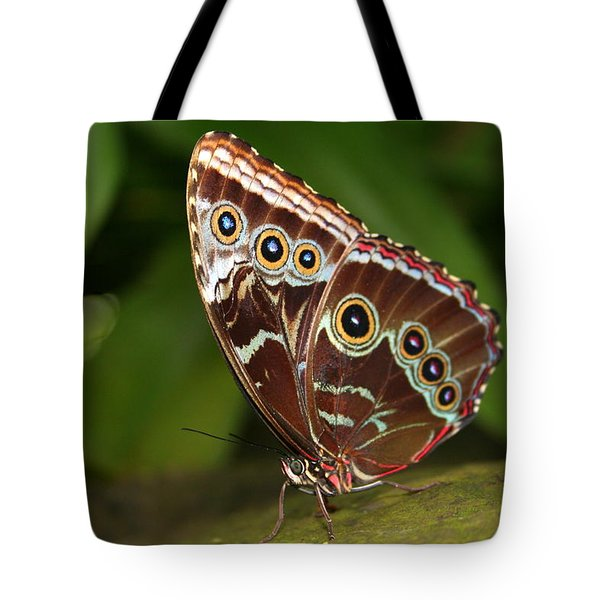 Tote Bag featuring the photograph Common Blue Morpho by Laurel Talabere