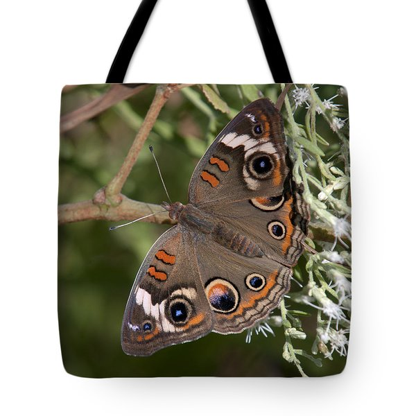 Common Buckeye Butterfly Din182 Tote Bag