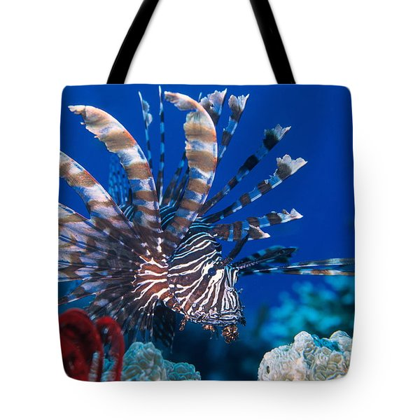 Common Lionfish Tote Bag by Franco Banfi and Photo Researchers