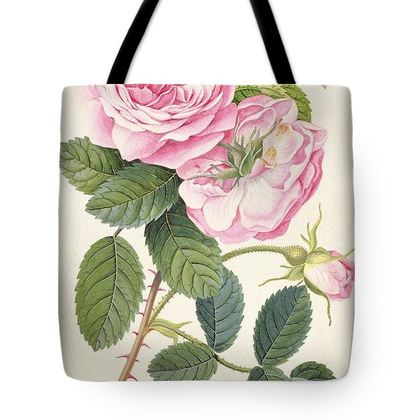 Common Provence Rose Tote Bag by Georg Dionysius Ehret